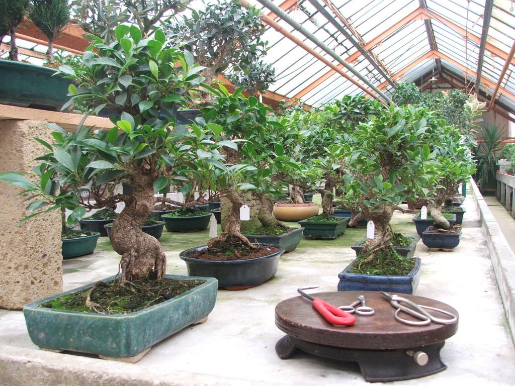 Vendita e custodia bonsai for Accessori per bonsai